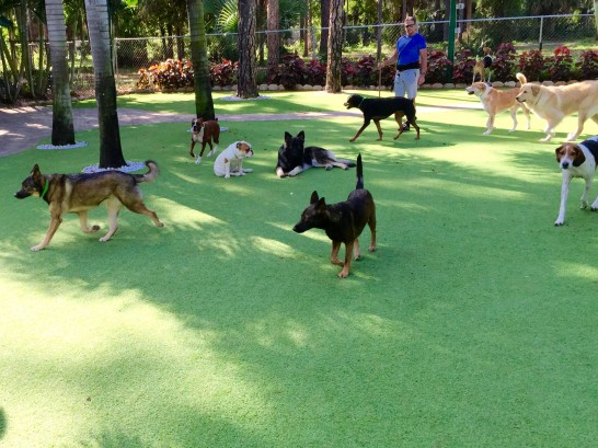 Artificial Grass Photos: Artificial Lawn Fontana, California Dog Park, Dogs Park