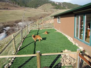 Artificial Grass Photos: Fake Grass Carpet Sedco Hills, California Dog Hospital, Backyard Design
