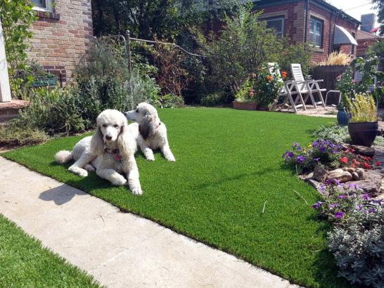 Artificial Grass Photos: How To Install Artificial Grass Agua Dulce, California Dog Parks, Dogs Park