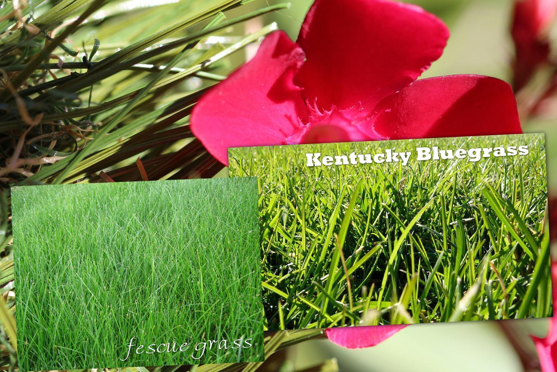 Artificial Grass Vs. Natural Grass